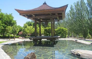 El Museo del Bonsai de Madrid