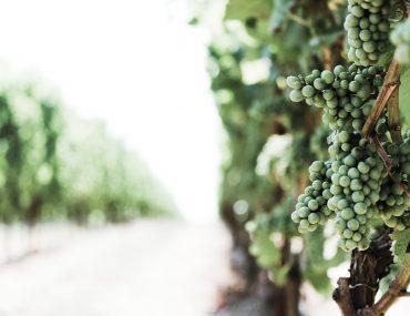 Denomicación de origen vinos de España